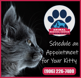 Feline Friendly Appointments Available!