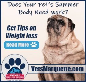 Be Aware of Your Pet\'s Weight